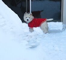 Snow bound and lov'n it! by MarianBendeth