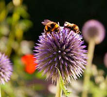 Bumbling Bees by Ross Buchanan
