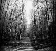 Pathway by ReidOriginals
