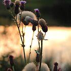 Lakeside Wildflower by Ross Buchanan