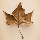Leaf by Colleen Farrell