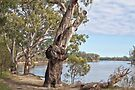 The Murray River, Mildura by Leanne Nelson
