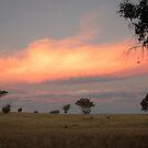 Military Road, Brukunga, South Australia by Michael Humphrys