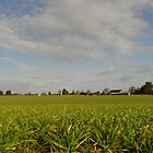 Crops by Lisa Blick
