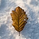 Autumn Fall on Snow Fall by Paul Barnett
