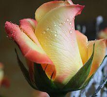 Enchanted Rose by karina5
