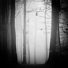 November mist by Alain Baumgarten