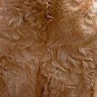 American Bashkir Curly's fur coat!!!!!! by LorrieBee