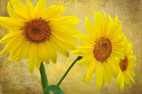 Sunflower Trio by Diane Schuster
