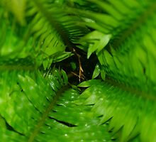 Green Mirage by Guatemwc