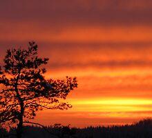 28.1.2012: Pine Tree & Sunrise by Petri Volanen