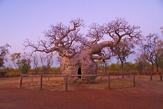 Boab Tree, Kimberley, WA by 4thdayimages