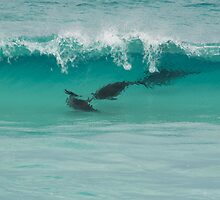 surfing dolphins by col hellmuth