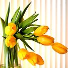 Still life in yellow tulips by tdash