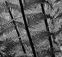 Bracken leaves (iphone case) by redown