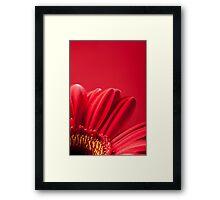 Gerbera 8 Framed Print