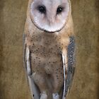 American Barn Owl by Rachelo