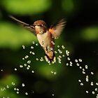 HUMMINGBIRD by RoseMarie747