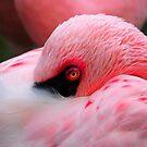 Pink Eye by milkayphoto