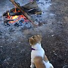 Camp Dog by thorpey