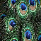 Peacock Feathers by Yampimon