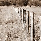 Fence by GumLeaf