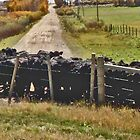 Cattle Grid, Wyoming (panorama) by Margaret  Hyde