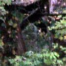 Ghostly Apparition Looking Out from Abandonned Building at Ringwood Manor by Jane Neill-Hancock