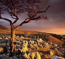Conistone II by Simon Bowen