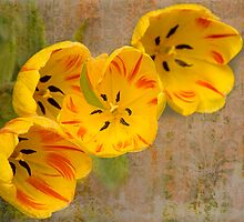 Tulips So Long Ago - II by Marilyn Cornwell