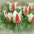 Tulip Green Garden by Marilyn Cornwell