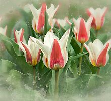 Tulip Green Garden by Marilyn Cornwell