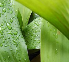 Water Drops Turn Green by Davide Montellanico