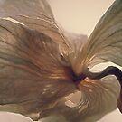 Expired Blossom by Dawne Olson
