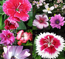 Passionate about Pink - Floral Collage by BlueMoonRose