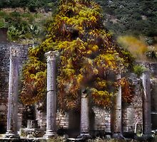 A Tree Grows In Ephesus by Ted Byrne