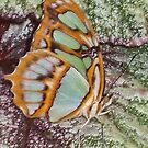 Butterfly 1005 by Angelica Frances
