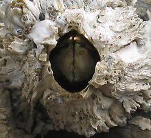 Monster Barnacle by EvansKelly
