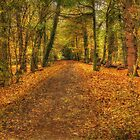 Autumn Walk by MartinMuir