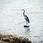 Heron At Eufaula Dam by Carolyn  Fletcher