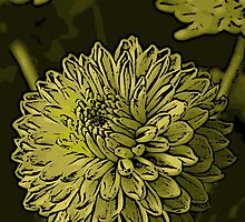 Green Chrysanthanum Woodcut by Colin Bentham