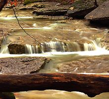 Lost Valley's Flowing Creeks by David  Hughes