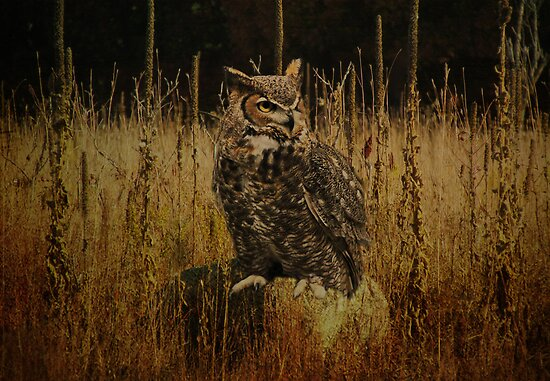 Horned Owl by swaby