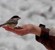 Chickadee feeding time by Josef Pittner