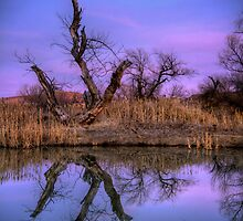 Marsh Mirror by Bob Larson