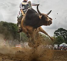 Up and Close with an Angry Bull by Amelia Chen