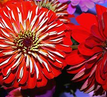 Red zinnias by ♥⊱ B. Randi Bailey
