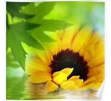 A Sunflower in Shade Poster