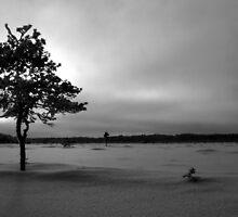 31.1.2012: Standing Alone by Petri Volanen