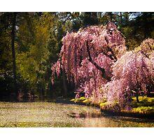Love Poem - Brooklyn Botanic Garden - New York City Photographic Print